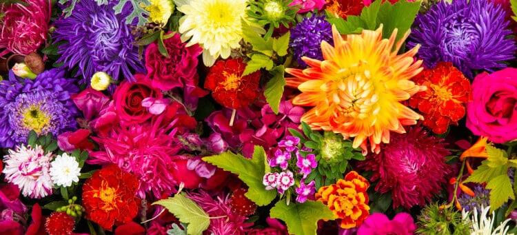 Odcień kwiatów